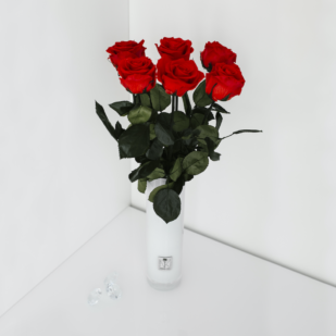 Langstielige Infinity Rosen