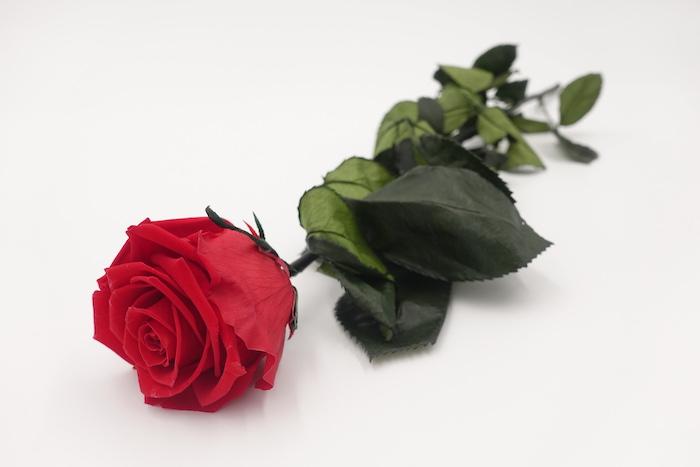 langstielige Rose einzeln