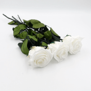 3 langstielige Infinity Rosen - Pure White