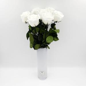 7 Langstielige Infinity Rosen in Vase Queen - Weiß