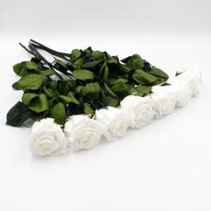 7 langstielige Infinity Rosen - Pure White